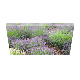 Lovely Lavender Canvas Print