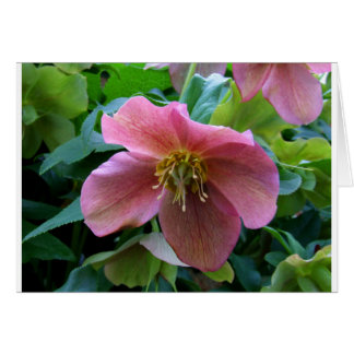 Lovely Lenten Rose Card