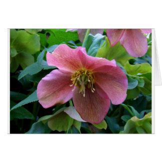 Lovely Lenten Rose Card
