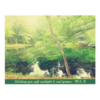 Lovely Little Pond Lush Green Tree Leaves Sunlight Postcard