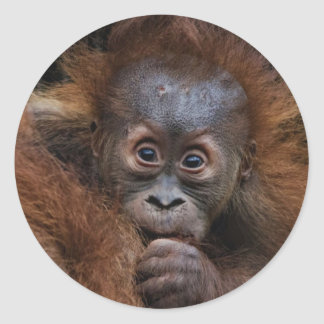 lovely orang baby classic round sticker