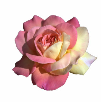 Lovely pink and yellow rose flower dress pin. photo sculpture button