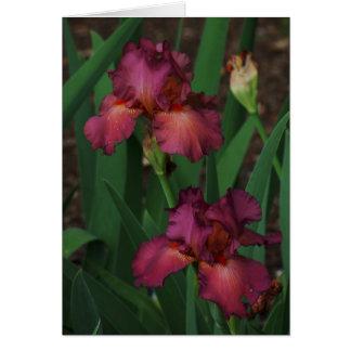 Lovely Pink Irises Greeting Card Blank Inside