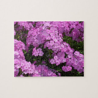 Lovely Pink  Phlox Jigsaw Puzzle