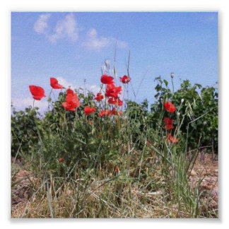 Lovely Poster of Red Poppies and Vines