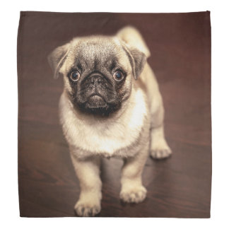 Lovely Puppy Pug, Dog, Pet, Animal Bandana