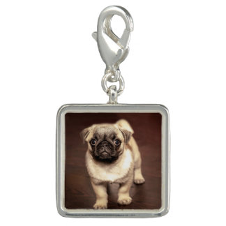 Lovely Puppy Pug, Dog, Pet, Animal Photo Charm