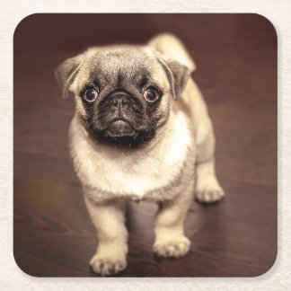 Lovely Puppy Pug, Dog, Pet, Animal Square Paper Coaster