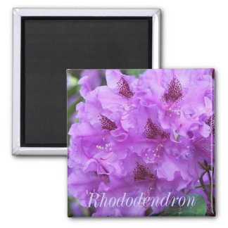 Lovely Purple Rhododendrons Floral Magnet