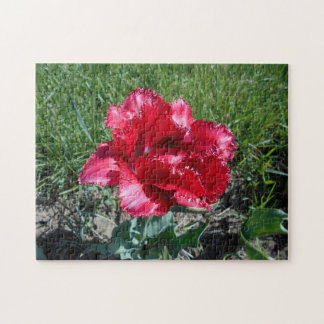 Lovely Red Tulip Jigsaw Puzzle