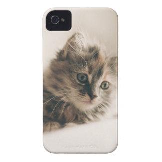 Lovely Sweet Cat Kitten Kitty iPhone 4 Cases
