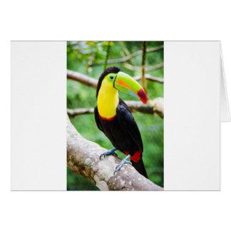 Lovely Toucan Card