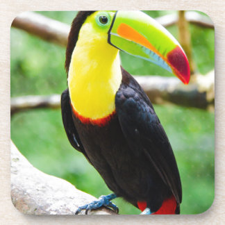 Lovely Toucan Drink Coaster