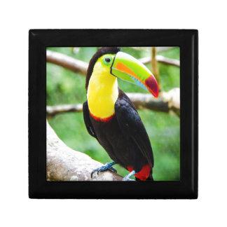 Lovely Toucan Gift Box