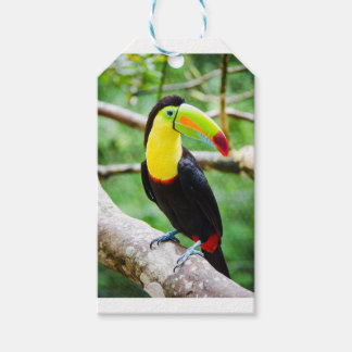 Lovely Toucan Gift Tags