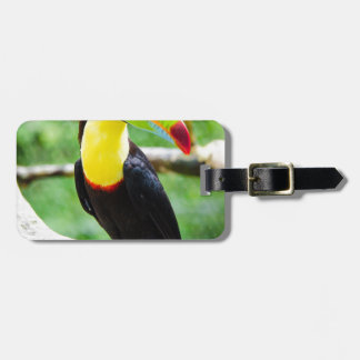 Lovely Toucan Luggage Tag
