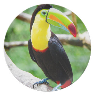 Lovely Toucan Plate