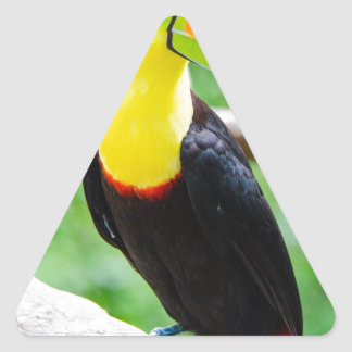 Lovely Toucan Triangle Sticker