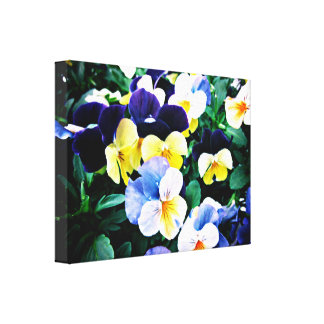 Lovely Viola Canvas Print