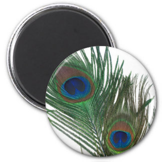 Lovely White Peacock Feather 2 Inch Round Magnet