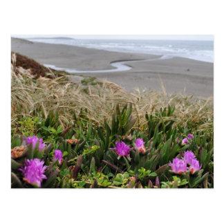 Lovin' The Coast Postcard