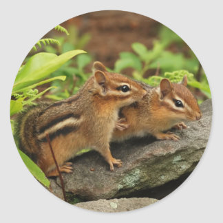 Loving Baby Chipmunk Siblings Classic Round Sticker