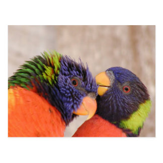 Loving birds postcard