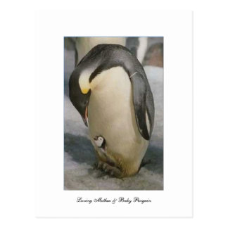 Loving Mother & Baby Penguin- Postcard