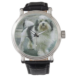 lowchen full 3 watch