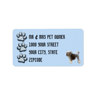 Lowchen with 3 Blue Pawprints