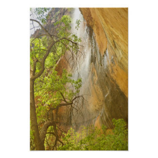 Lower Emerald Pool Waterfall Red rock and Tree Poster