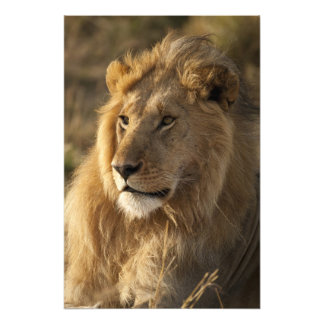 Lower Mara in the Masai Mara Game Reserve, Photographic Print