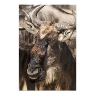 Lower Mara, Masai Mara Game Reserve, Photo Print