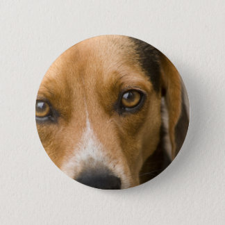 Loyal Beagle Hound Hunting Dog 2 Inch Round Button