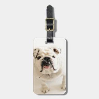 Loyal White Bulldog Photograph Luggage Tag
