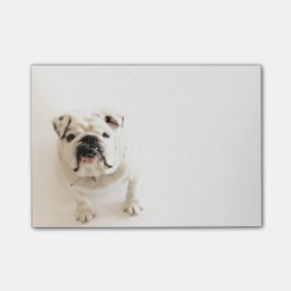 Loyal White Bulldog Photograph Post-it® Notes
