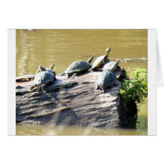 LSU Turtles.JPG Card