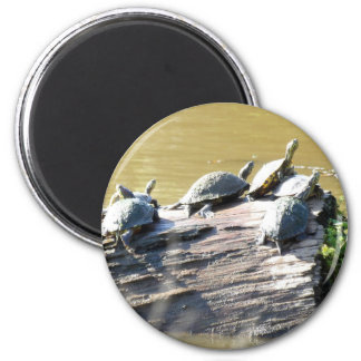 LSU Turtles.JPG Magnet