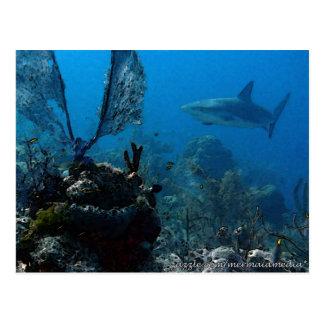 Ltd Edition Bahamian Reef Sharks Postcard