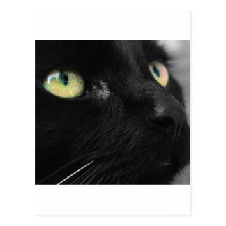 Lucky Black Cat Postcard
