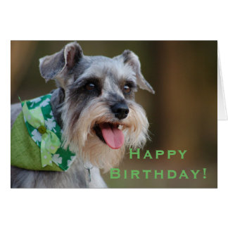 Lucky Miniature Schnauzer Happy Birthday Card