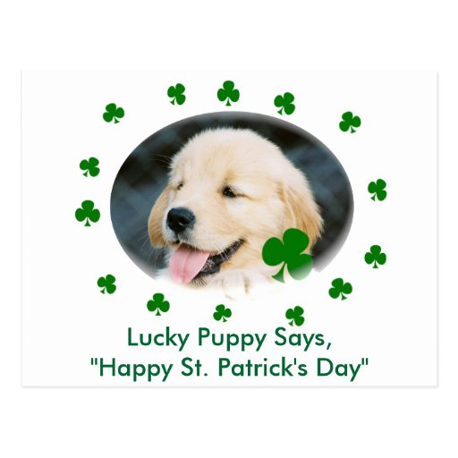 Lucky Puppy St. Patrick's Day Cards, Shirts & Gifs Postcards