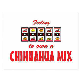 Lucky to Own a Chihuahua Mix Fun Dog Design Postcards