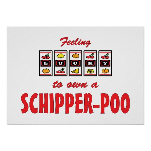 Lucky to Own a Schipper-Poo Fun Dog Design Print