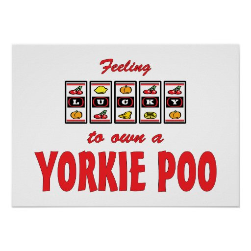 Lucky to Own a Yorkie Poo Fun Dog Design Poster