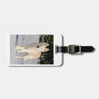 Luggage tag features Siberian husky