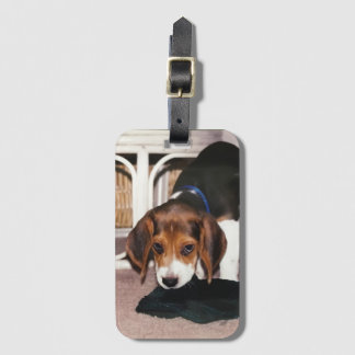 Luggage Tag with Beagle puppy
