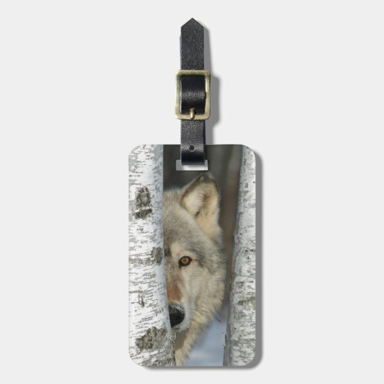 luggage tag with photo of grey wolf in birch trees