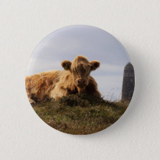 Luing cow on the Isle of Islay, Scotland 2 Inch Round Button