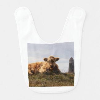 Luing cow on the Isle of Islay, Scotland Bib
